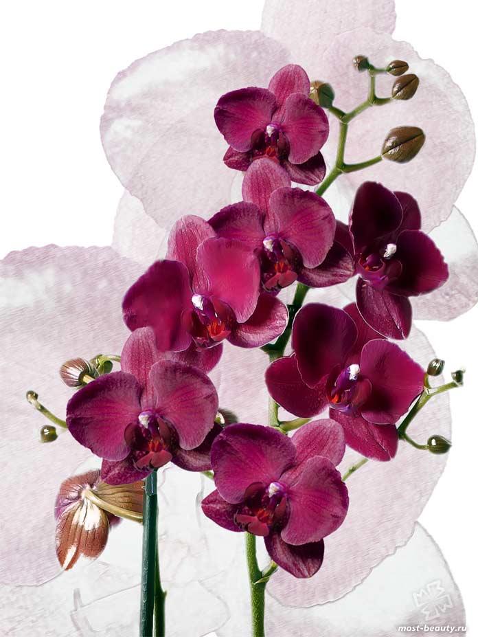 Орхидея. CC0