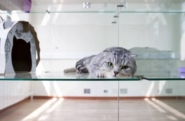 Гостиничные номера для кошек и котов